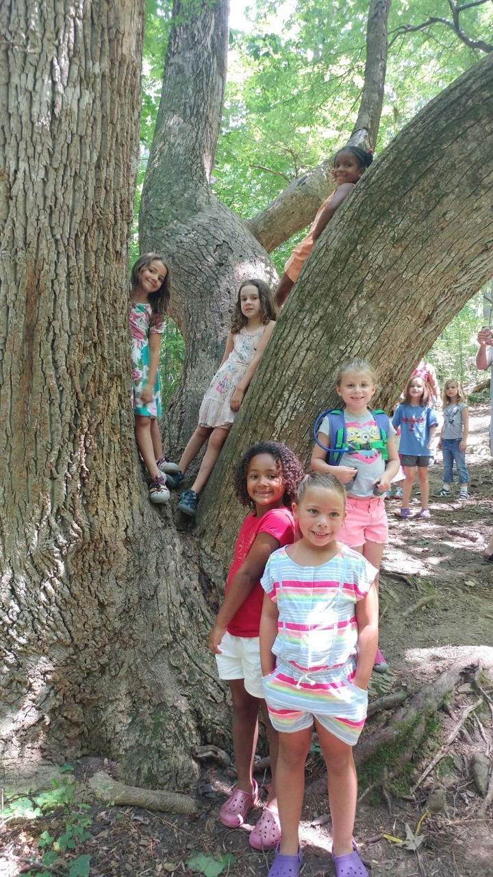 CH-GS-A-Daisy Troop In Tree NKR 18