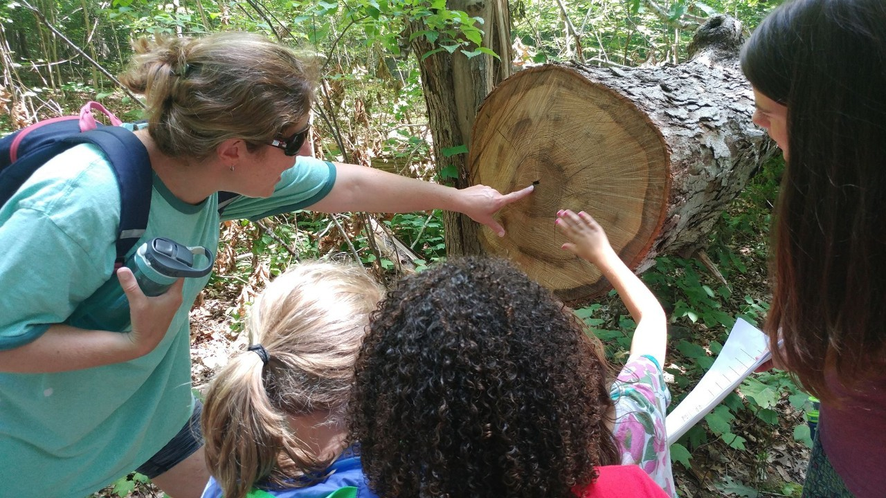 Daisy Girl Scouts learn all about tress on a hike with their troop leaders.